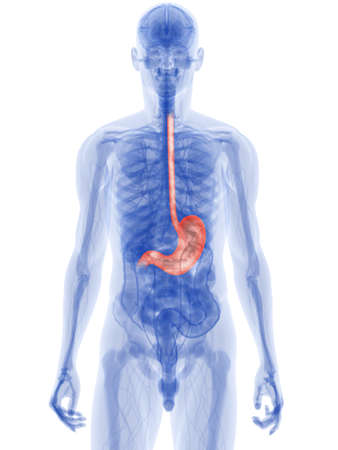 stomach pain: highlighted stomach