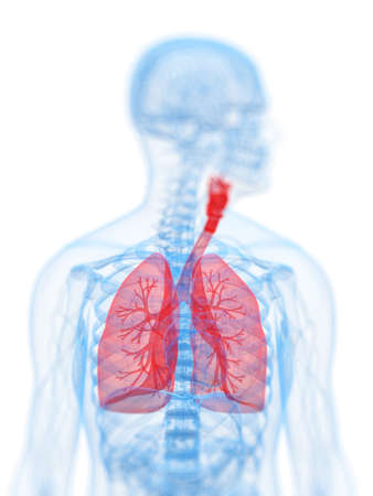 inflammated: 3d rendered, medical illustration of the human respiratory system