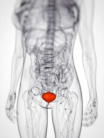 metastasis: 3d rendered scientific illustration of a female bladder