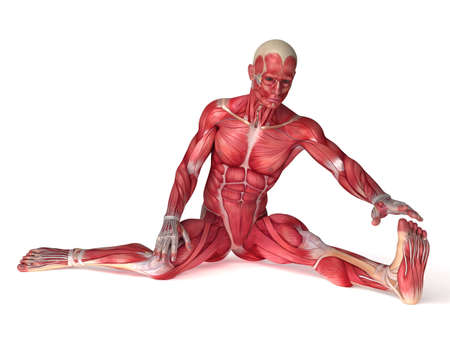 anatomic: 3d rendered scientific illustration of the males muscles