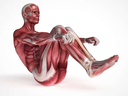 sapiens: 3d rendered scientific illustration of the males muscles