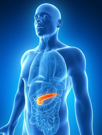 pancreas: 3d illustration rendu du pancr�as masculin
