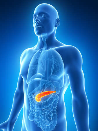 inflamed: 3d rendered illustration of the male pancreas