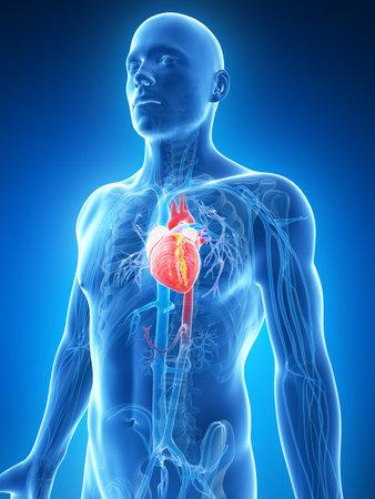 kardio: 3d renderelt illusztrációja a férfi szív