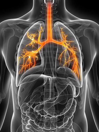 bronchi: 3d rindi� la ilustraci�n de los bronquios