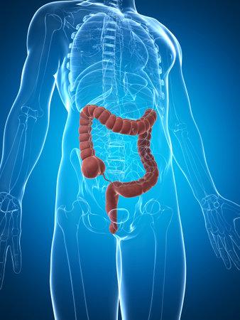 3d rendered illustration of the male colon  illustration