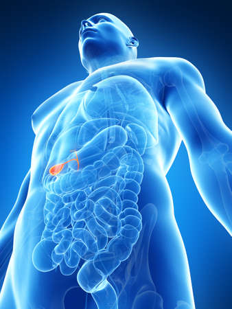 gall: 3d rendered illustration of the male gallbladder