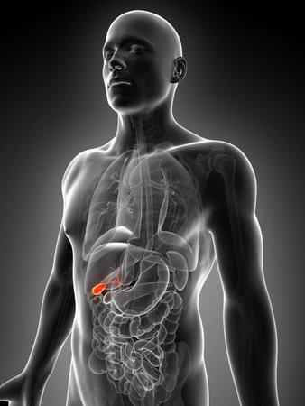 abdomen: 3d rendered illustration of the male gallbladder
