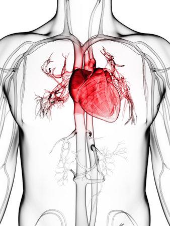 enfermedades del corazon: 3d rindi? la ilustraci?n del sistema vascular humano Foto de archivo