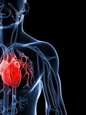 heart disease: 3d rendered illustration of the human vascular system