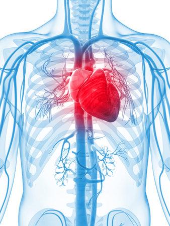 hartaanval: 3d teruggegeven illustratie van het menselijke vaatstelsel