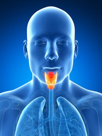 larynx: 3d rendered illustration of the male larynx