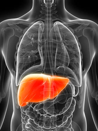 3d rendered illustration of the male liver Stock Illustration - 17911212