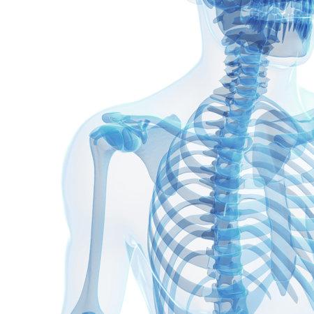 tibia: 3d rendered illustration of the male skeleton Stock Photo