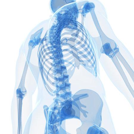 esqueleto: 3d rindi? la ilustraci?n del esqueleto masculino Foto de archivo