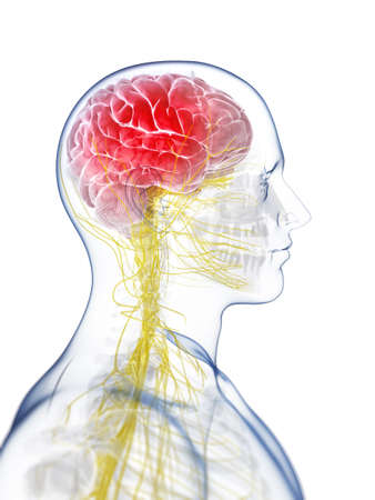 3d rendered illustration of the head - headache Stock Illustration - 17911107