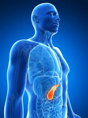 3d rendered illustration of the male pancreas Stock Illustration - 17906564