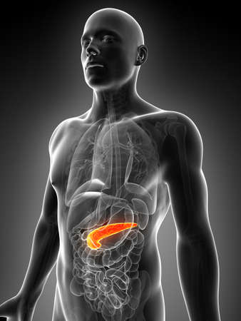 3d rendered illustration of the male pancreas illustration