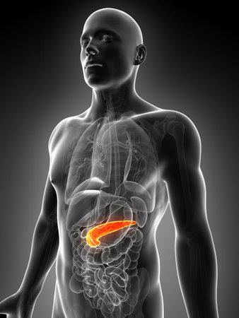 pancreatitis: 3d rendered illustration of the male pancreas