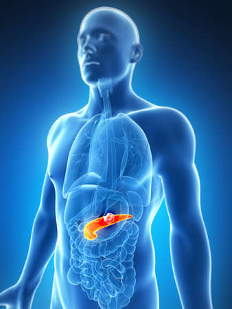 pancreas: 3d illustration rendu du pancr�as hommes - cancer Banque d'images