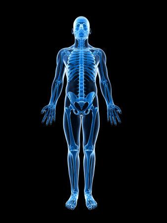esqueleto humano: 3d rindió la ilustración del esqueleto masculino Foto de archivo
