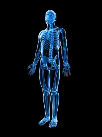 esqueleto humano: 3d rindi? la ilustraci?n del esqueleto masculino Foto de archivo