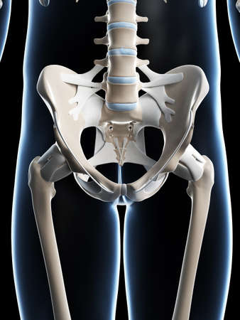 sacrum: 3d rendered illustration of the male skeleton Stock Photo
