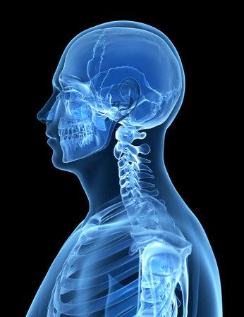 collo: Illustrazione di rendering 3D dello scheletro maschio Archivio Fotografico