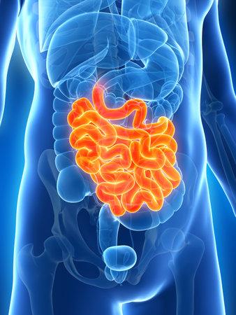 intestino: 3d rindi� la ilustraci�n del intestino delgado masculino Foto de archivo