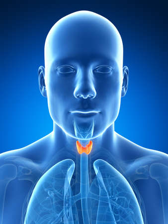 throat: 3d rendered illustration of the male thyroid gland