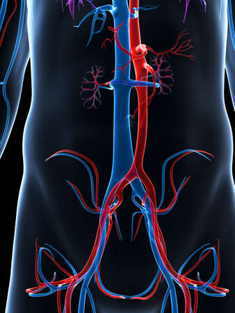 pulmonary trunk: 3d rendered illustration of the human vascular system