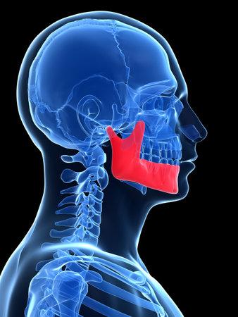 mandible: 3d rendered illustration - jawbone