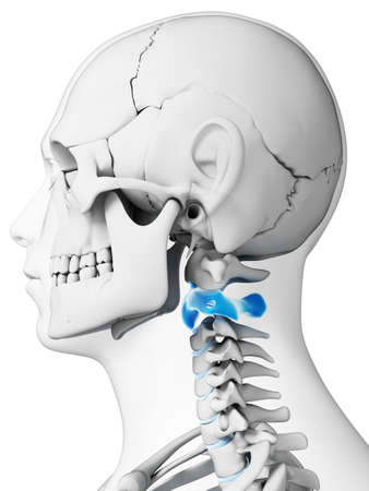 lateral: 3d rendered illustration - axis vertebrae Stock Photo