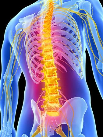 colonna vertebrale: Illustrazione di rendering 3D - mal di schiena Archivio Fotografico
