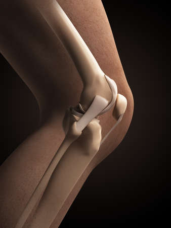 collateral: 3d rendered illustration - anatomy of the knee