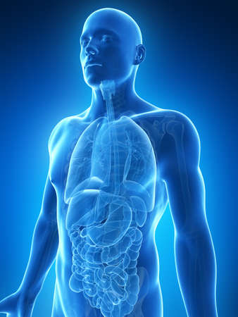 abdomen: 3d rendered illustration of the male anatomy Stock Photo