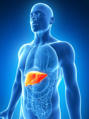 inflamed: 3d rendered illustration of the male liver Stock Photo