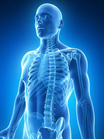 skelett mensch: 3d gerenderten Darstellung des m�nnlichen Skeletts