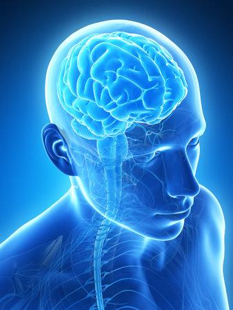 medical scanner: 3d rendered illustration - male brain Stock Photo