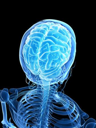 3d rendered illustration - male brain Stock Illustration - 18071528