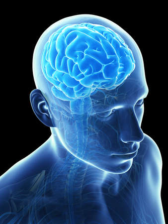 brainpan: 3d rendered illustration - male brain Stock Photo