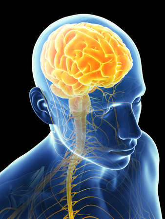 3 d レンダリングされたグラフィック - 男性の脳