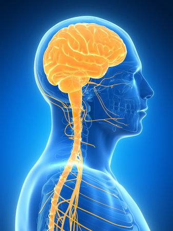 3d rendered illustration - male brain Stock Illustration - 18071472