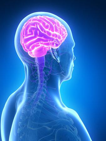 3d rendered illustration - male brain Stock Photo