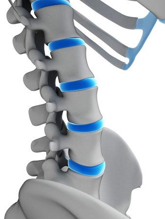 intervertebral: 3d rendered illustration - intervertebral disks
