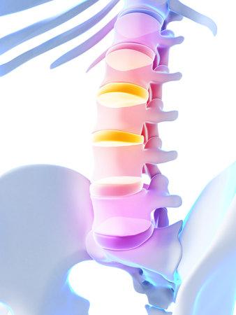 thoracic: 3d rendered illustration - intervertebral disks
