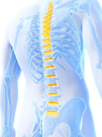 lumbar spine: 3d rendered illustration - intervertebral disks