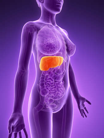3d rendered illustration - liver Stock Illustration - 18071170