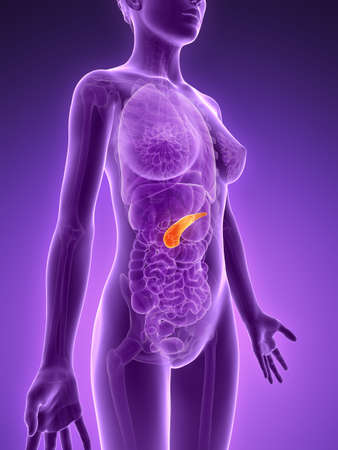 3d rendered illustration - pancreas Stock Illustration - 18071181