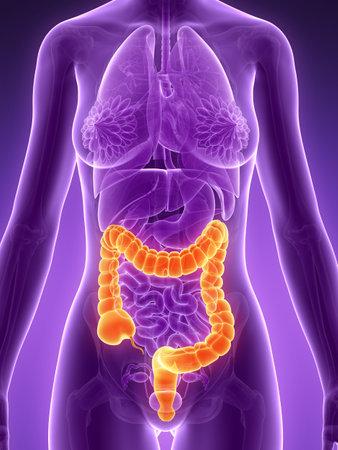 intestino grueso: Ilustración 3d rendered - dos puntos